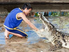 crocodile-1543034_1920